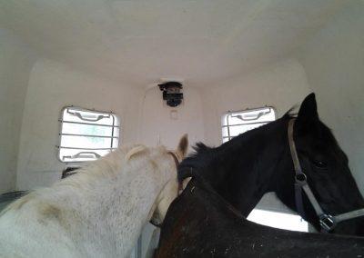 paardentrailer (1)